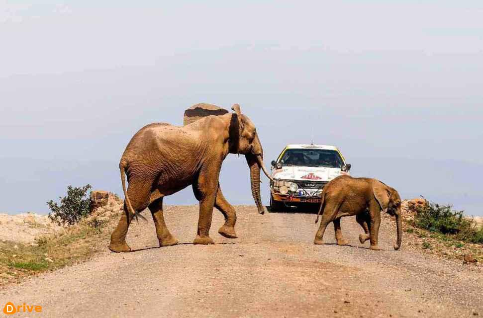 1987 Audi 200 Quattro C3 and elephants